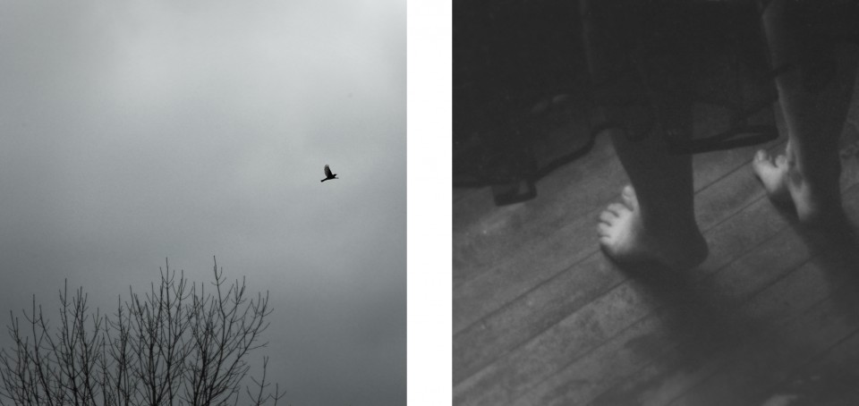 •bird+feet