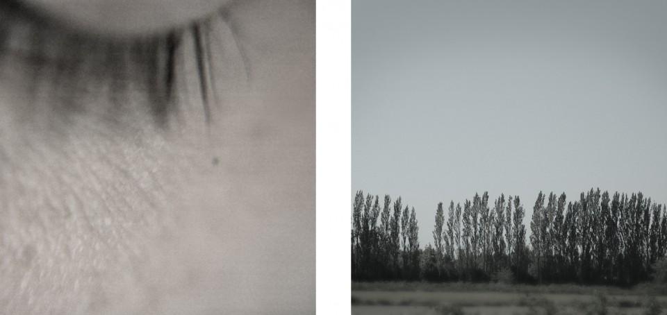•lashes+poplars